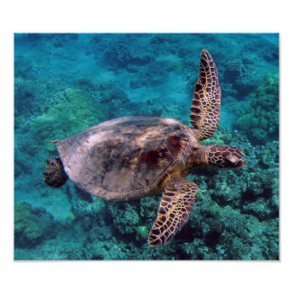 Hawaii Turtle Honu Poster