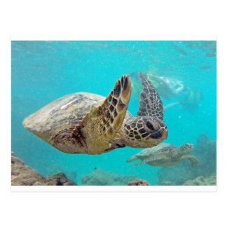 Hawaii Turtles Postcard