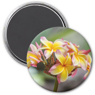 Hawaii Yellow Pink Plumeria Flowers Magnet