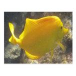 Hawaii Yellow Tang Fish Postcards