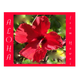 Hawaiian Aloha Red Hibiscus Flower Postcard