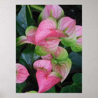 Hawaiian Anthurium Poster