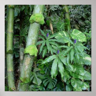 Hawaiian Bamboo and Blue Ginger Poster