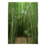 Hawaiian Bamboo Forest Poster
