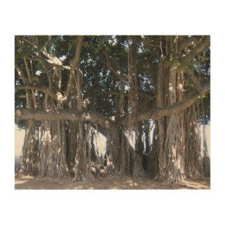 Hawaiian Banyan Tree Wood Poster