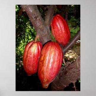 Hawaiian Cacao Pods Poster