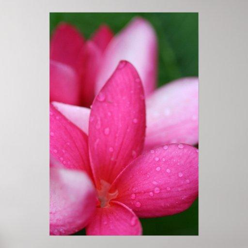 Hawaiian Flower Poster