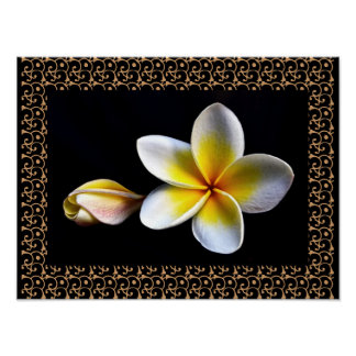 Hawaiian Frangipani Blissful Blossoms Plumerias Poster