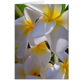 Hawaiian Frangipani Card