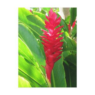 Hawaiian Ginger Canvas Print