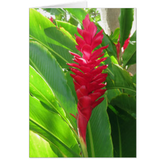 Hawaiian Ginger Card