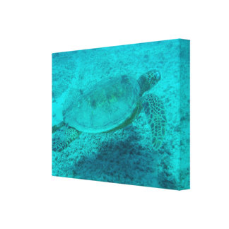 Hawaiian Green Sea Turtle Gallery Wrapped Canvas