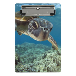 Hawaiian Green Sea Turtle Mini Clipboard