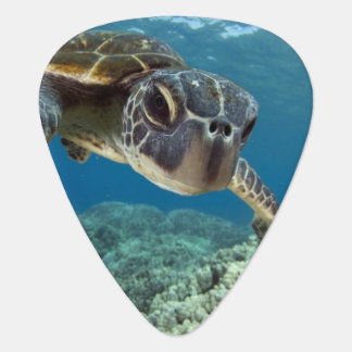 Hawaiian Green Sea Turtle Pick