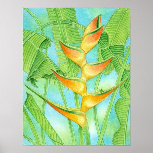 Hawaiian Heliconia Poster