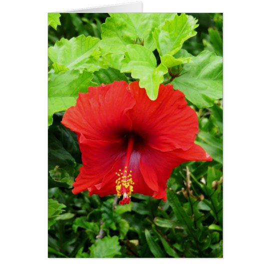 Hawaiian Hibiscus Card