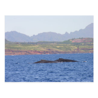 Hawaiian Humpback Whales Postcard