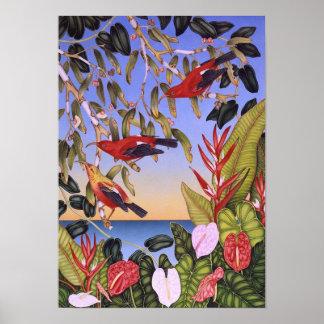 Hawaiian I'iwi birds Poster