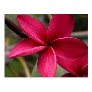 Hawaiian Lea Flower Postcard