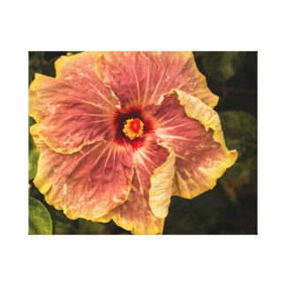 Hawaiian Lilac Hibiscus from Kauai Photograph Canvas Print