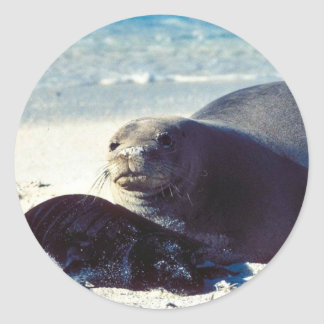 Hawaiian Monk Seal and Pup Classic Round Sticker