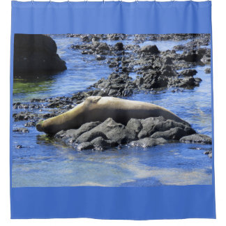 Hawaiian Monk Seal Sunbathing