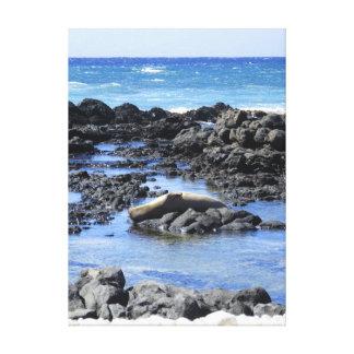 Hawaiian Monk Seal Sunbathing Canvas Print