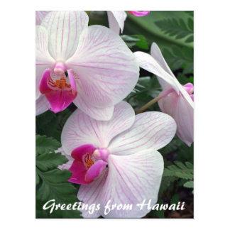 hawaiian orchids postcard