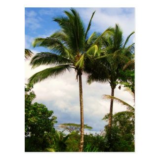 Hawaiian palm tree postcard