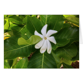 Hawaiian Pikake Jasmine Blossom Card