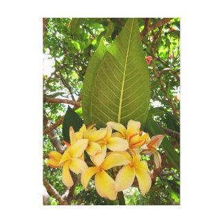 Hawaiian Plumeria Canvas Print