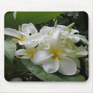 Hawaiian Plumeria Mouse Pad