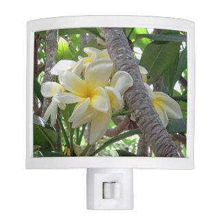 Hawaiian Plumeria Nite Lites