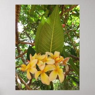 Hawaiian Plumeria Poster