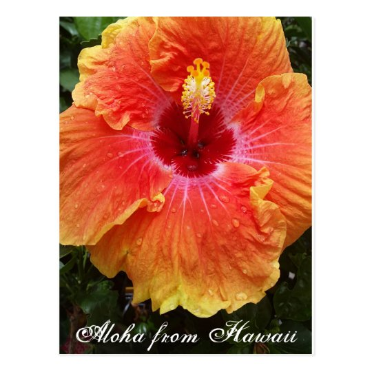 Hawaiian postcard, hawaii, aloha, hibiscus,flower, postcard