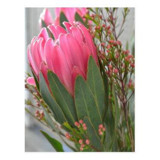 Hawaiian Protea Flowers Postcard