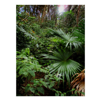 Hawaiian Rain Forest Poster