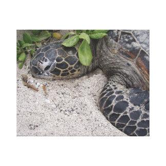 Hawaiian Sea Turtle Stretched Canvas Print