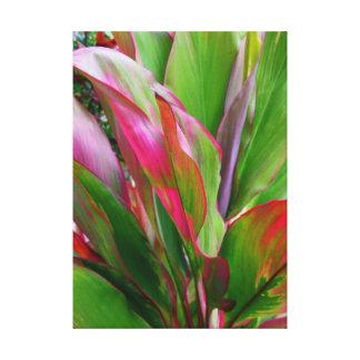 Hawaiian Ti Plant Canvas Print