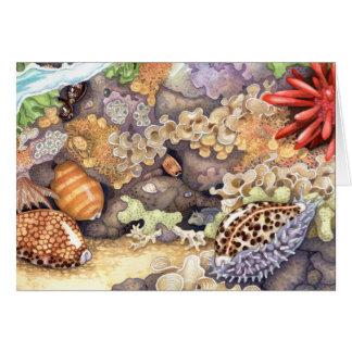 Hawaiian Tide Pool Card
