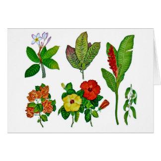 Hawaiian Tropical Botanicals Card