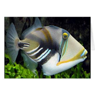 Hawaiian Tropical Fish Card