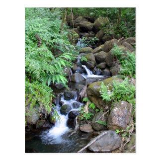 Hawaiian Tropical Stream Postcard