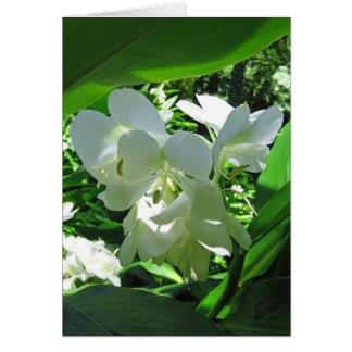 Hawaiian White Ginger Card