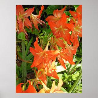 Hawaiian Wild Amaryllis Poster