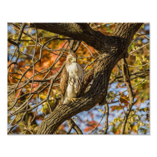 Hawk and Fall Foliage Photo Print