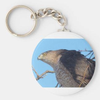 hawk basic round button keychain