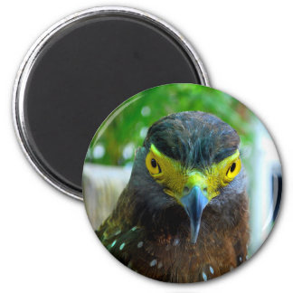 Hawk Bird Magnet