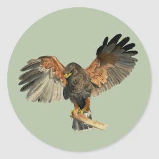 Hawk Flapping Wings Watercolor Painting Classic Round Sticker