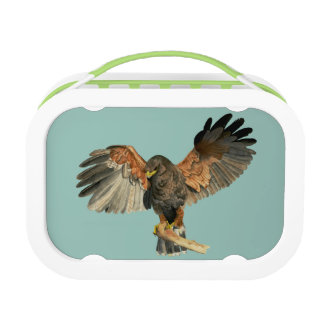 Hawk Flapping Wings Watercolor Painting Lunch Box